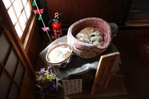 """Vrais faux chats !.... (la """"mascotte"""" du temple... où l'on s'occupe des vrais chats de Tsumago...)"""