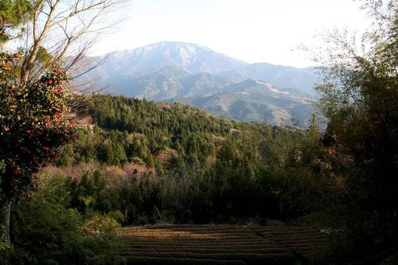 Le mont Ena et les champs de thé (au premier plan)