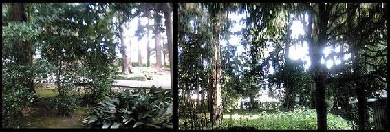 本覚寺の林 蝉雨