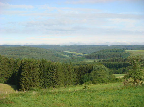 The view Major DePuy had from the M10. The Sollerbach Valley is in the middle of the photo, where Major Kegel and his men were. (the vegetation was different January 1945)
