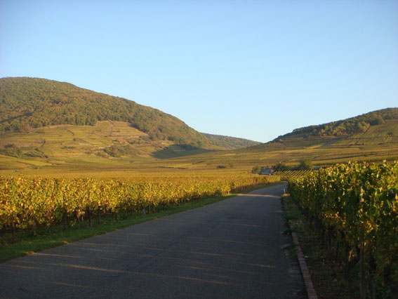 The Kientzheim - Riquewihr road with the Hohe Schwaertz on the left and the slope of Hill 393 on the right