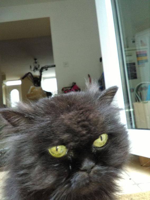 our Voodoo black cat was 17 this week