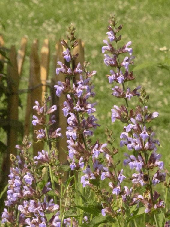 Der Garten im Sommer 2012