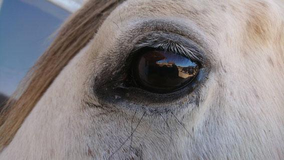 Cocos linkes Auge - auch hier ist die Kupferbrille nach zwei Wochen fast gänzlich verschwunden.