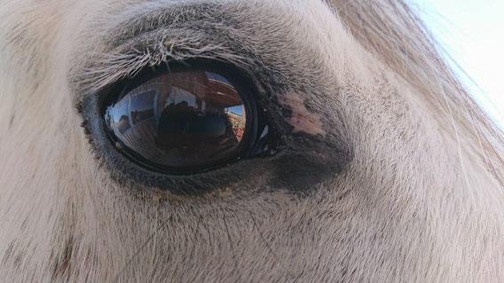 Cocos rechtes Auge - ein kleiner Fleck war nach zwei Wochen noch zu sehen, ist aber inzwischen auch verschwunden.