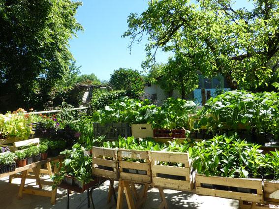 Le chemin de la mairie: un jardin bio!