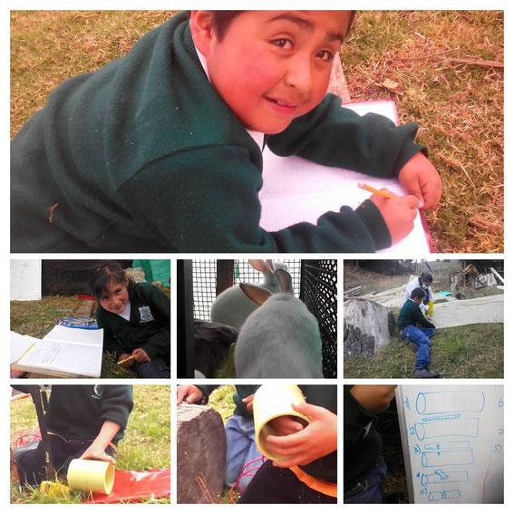Preparación de las instalaciones para la cría de conejos en nuestra escuela.