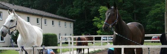 Schimmi & Choco Zepernick 2012
