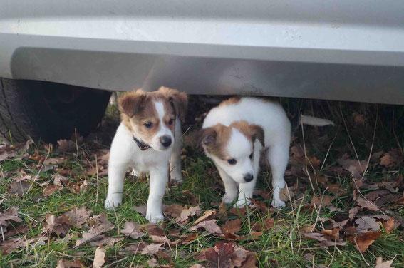 Domino und Dilara suchen Deckung unterm Schneckenauto