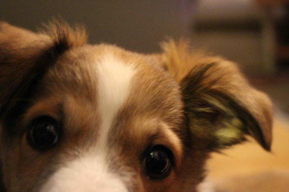 Davy schaut ganz neugierig in die Kamera :-)