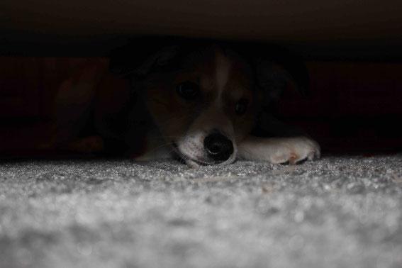 Und hier - kaum zu erkennen - Davy an einem seiner Lieblingsplätze: unterm Sofa :-)