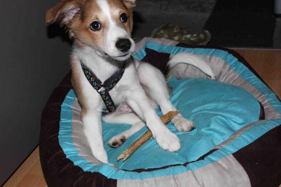 Hier präsentiert er stolz sein neues Crunchy und den Stock, den er aus dem Wald mitgebracht hat.