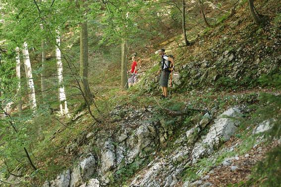 Auf schönem Weg quert man beim Abstieg steile Hänge