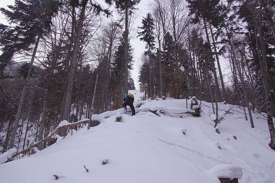 Aufstieg im steilen Wald in rund 900m Seehöhe