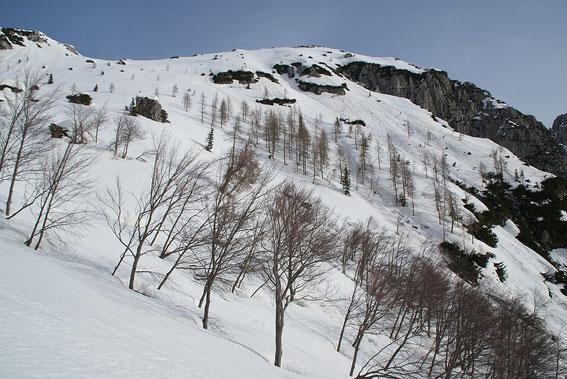 Am Ende des kurzen Waldgürtels auf Höhe der Verebnung in 1620m der Blick zum Gipfelhang