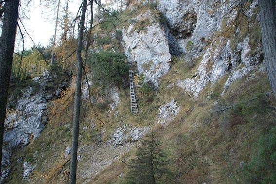 Die Leiter knapp oberhalb der Jagdhütte