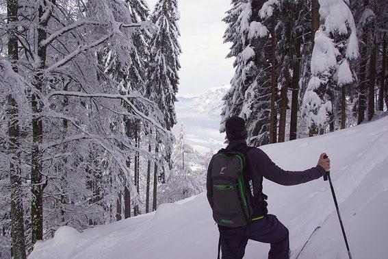 Aufstieg im Wald unter dem Pridou mit Blick zum Dobratsch