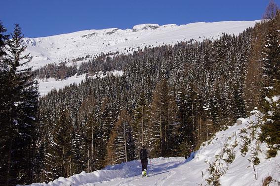 Am flachen Forstweg in knapp über 1600m mit dem Blick zum Gipfel