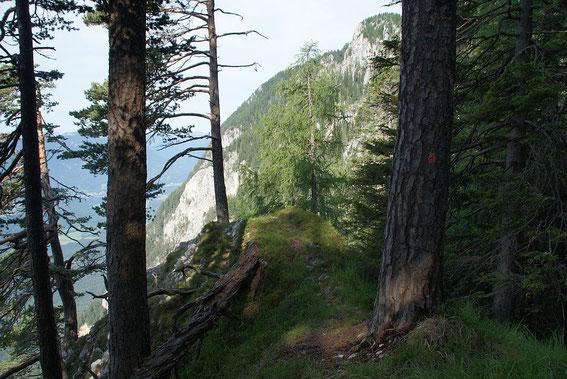 Markierungspunkt am Baum und Aussichtskanzel im Hintergrund