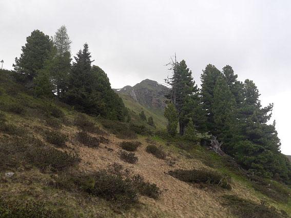 Der Gregerlnock aufgenommen von Südosten aus dem Zirbenwald heraus