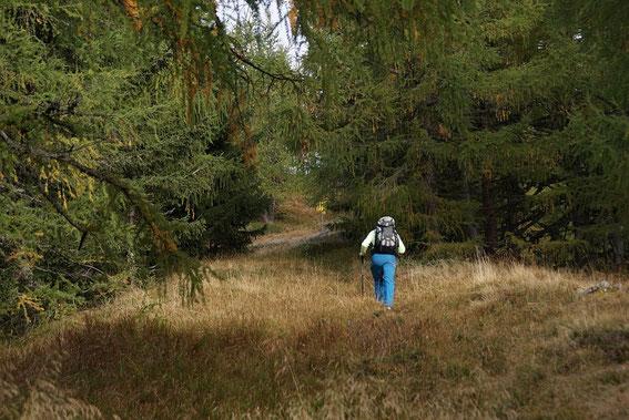 Am Gugganigriegel kurz vor der Wegkreuzung Dolomitenblick