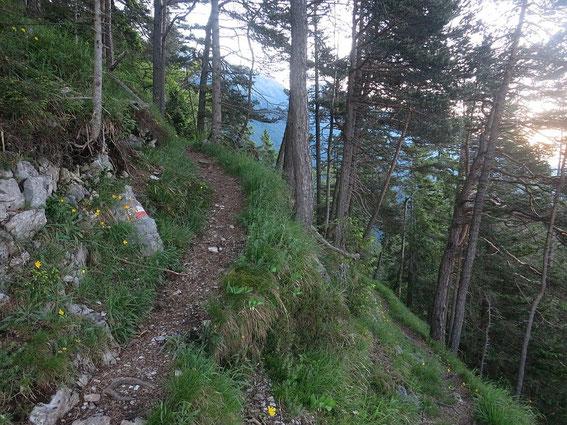 Kurzer gemütlicher Teil des Steiges durch den steilen Wald Richtung Achselkopfopf