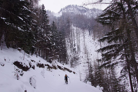 Beim Erreichen des Schlages in 1000m Höhe kommt Freude auf, der Ausstieg zum Grat ist über diesen Schlag aufrgund sperrender Felsen im oberen Teil nicht möglich