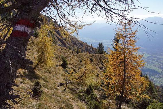 Am Rückweg in die steile Grasflanke