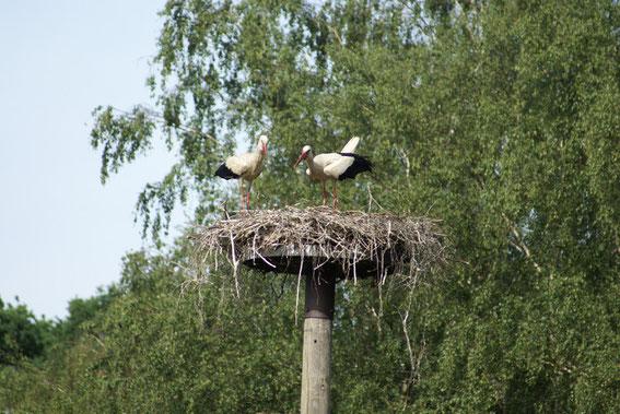 Nest 12 am Wiesengrund