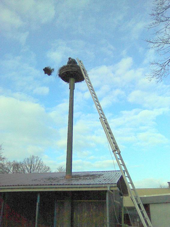 Nest bei Tölle Beimreinigen 2009