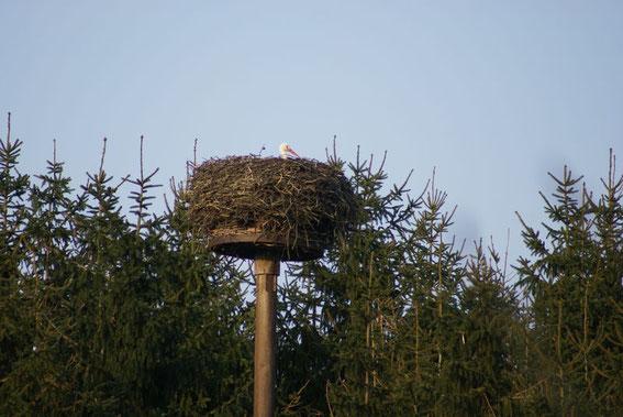 Nest Steht Ausserhalb der Kolonie