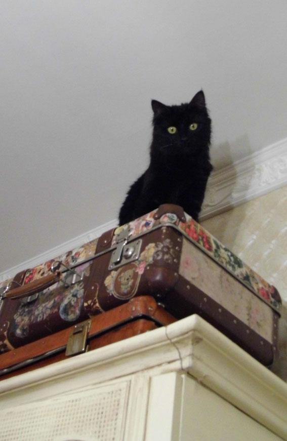 старый чемодан, шебби шик, декупаж, комната Шебби шик, котик