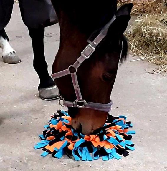 Gebruik van de snuffelmat voor hersenwerk/communicatietraining bij paarden.