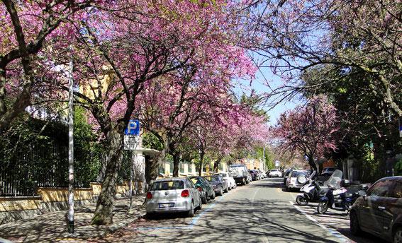 Blühende Straße am Aventin