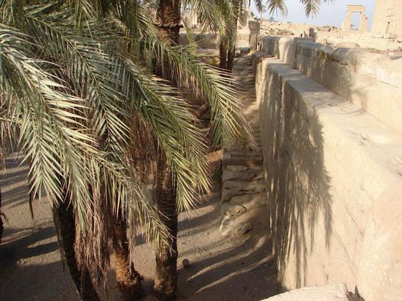 Dendera - Palmen, Mauern