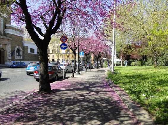 Straße mit lila Bäumen