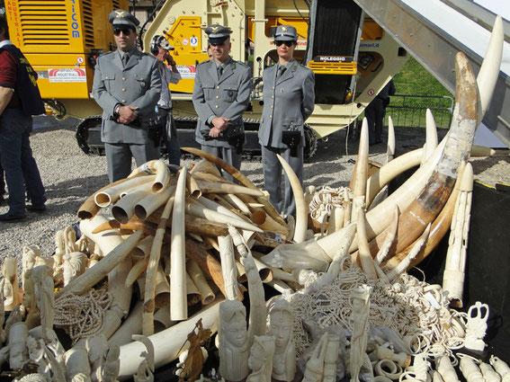 ca. 500 kg Elfenbein