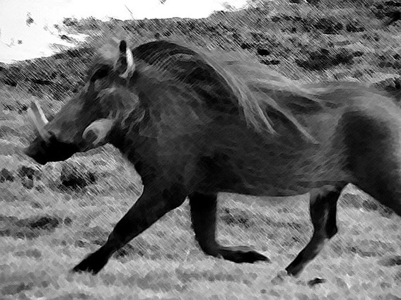 Warthog (photoshopped, as the original foto was not clear ;-)