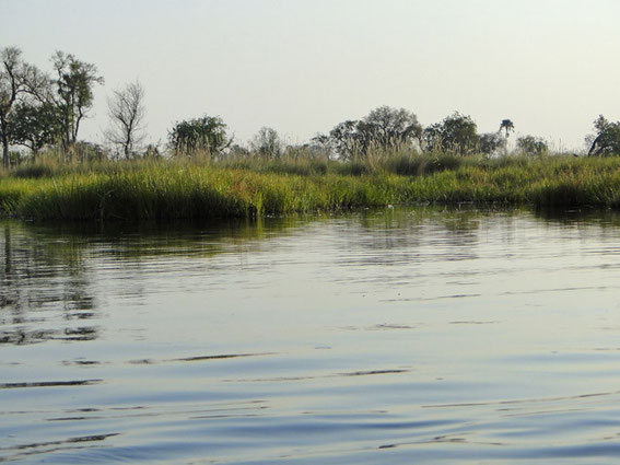 'Hippo-Bucht'