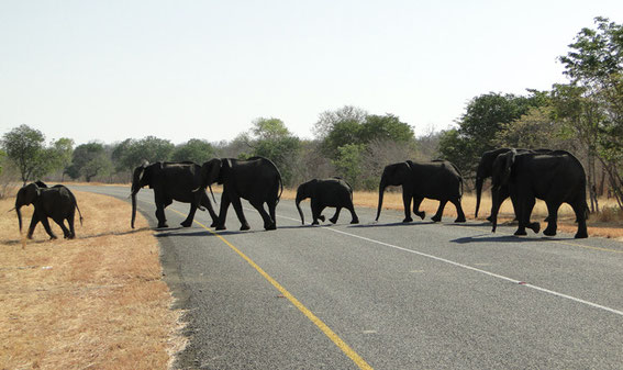 And another elephant crossing!