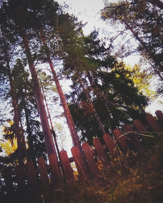 forêt bois forêt arbre automne suède bigousteppes