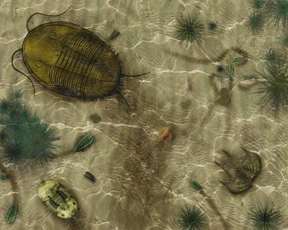Ordovícico medio - Llanvirn inferior