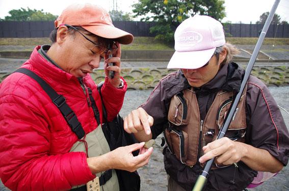 海産アユの卵を確認中の藤林さんと澤組合長