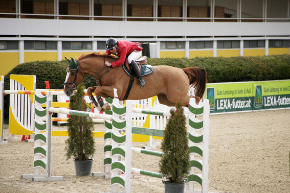 Der amtierende OÖ Landesmeister möchte in Linz seinen Titel verteidigen © Linzer Pferdefestival