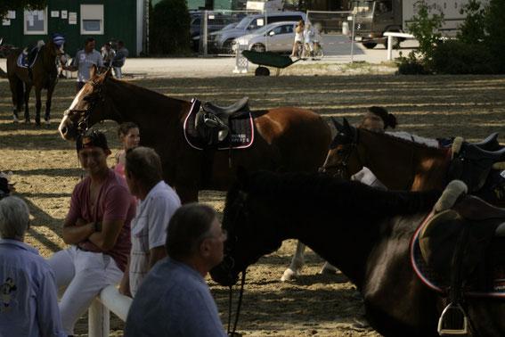 Schattenplätze sind derzeit sehr begehrt © Linzer Pferdefestival