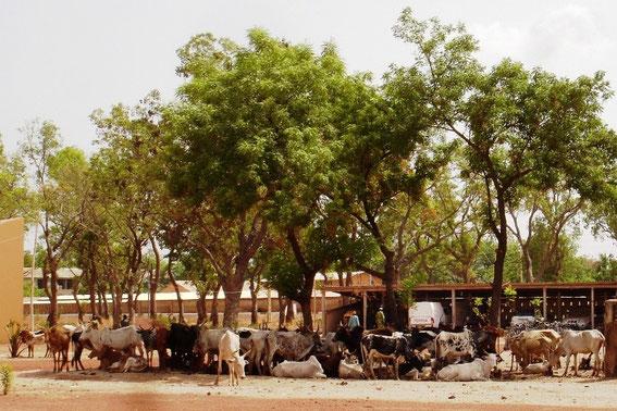 Plate-forme de la Transhumance transfrontalière Benin - Burkina Faso
