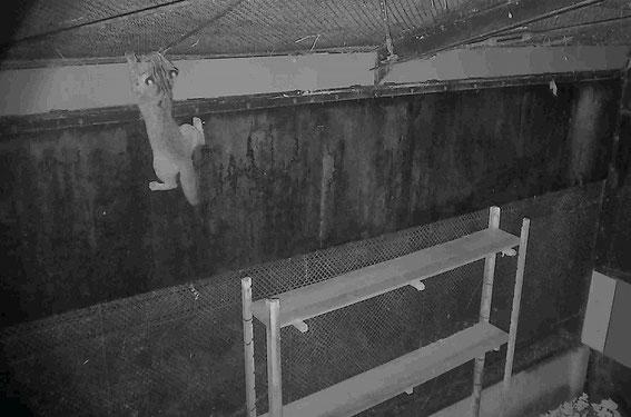 天井の金網へジャンプ!