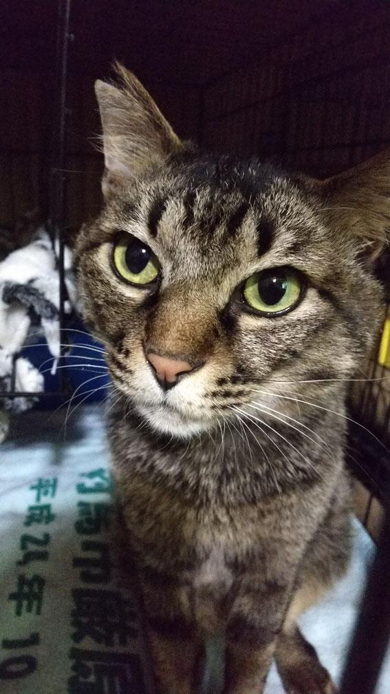 決め顔で写真を撮らせてくれた「やんちゃ」 ケージの外に出るとすりすりネコに変化。