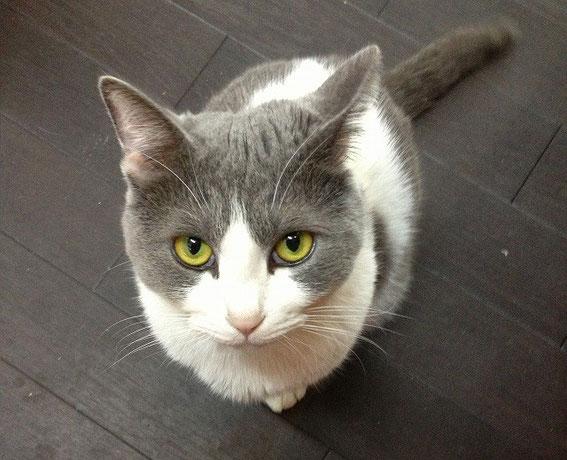 福岡南本店の先住猫の花子の写真