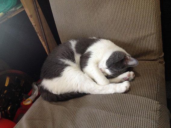 猫の花子img2